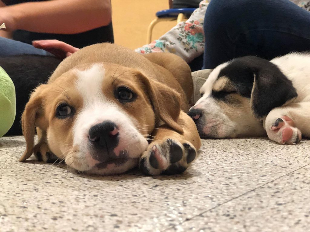 Give Dog To Humane Society